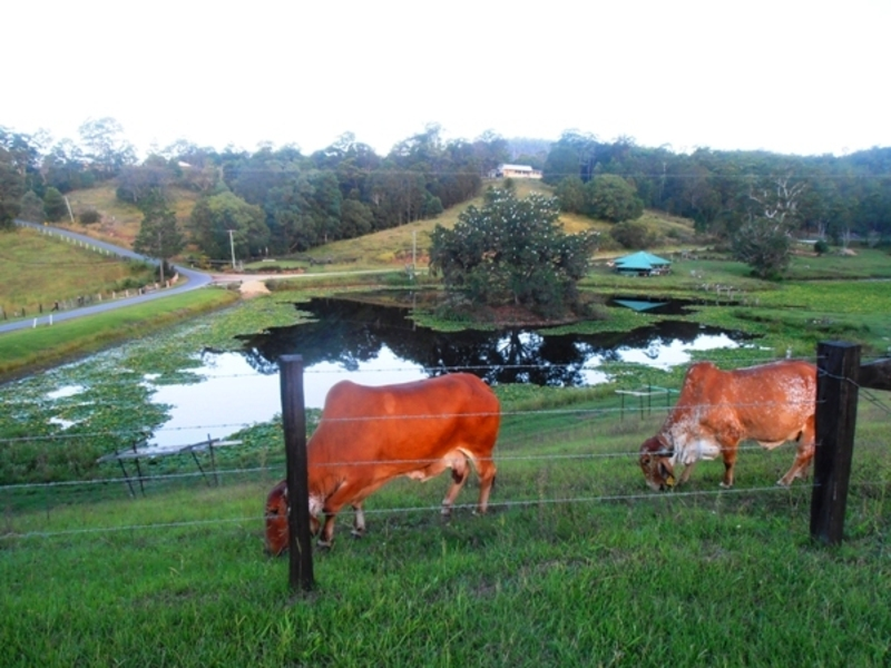 cows  - Free Farm Stays With Willing Workers On Organic Farms