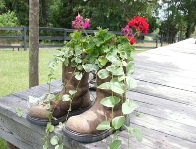 Flowers in Old Boots