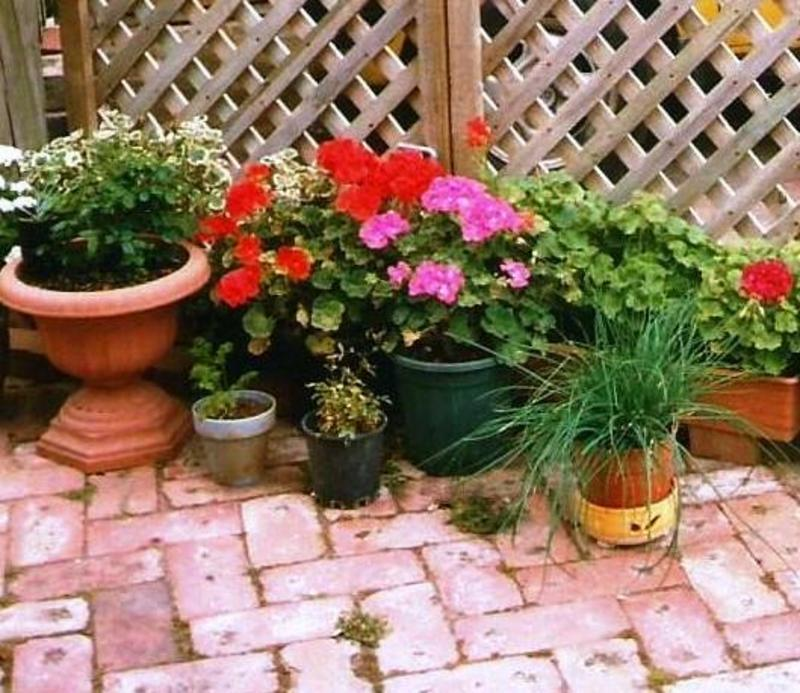Group Of Pot Plants