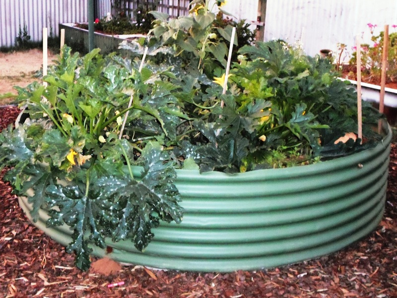 Vegies Growing In Wheelbarrow